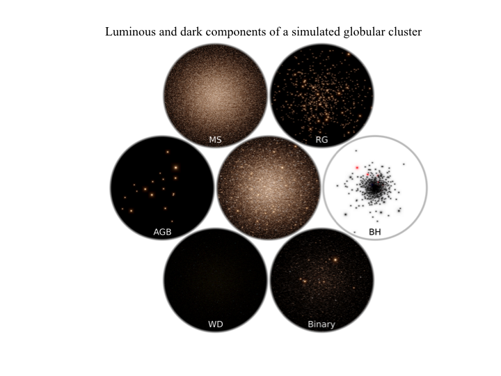 Fig 2: Mock color image (BVI) of all stars of a simulated globular cluster (central image covering about 60 pc) after 12 billion years of evolution. The surrounding panels highlight the different stellar types (from top left): main sequence stars (MS), red giants (RG) dominating the light, invisible black holes (BH), binary stars (Binary), white dwarfs (WD) and asymptotic giant branch stars (AGB). The white dwarfs (about 80.000) are unresolved in this mock image and therefore invisible. The black holes (right-most panel) form a dense subsystem in the center (binaries in red).