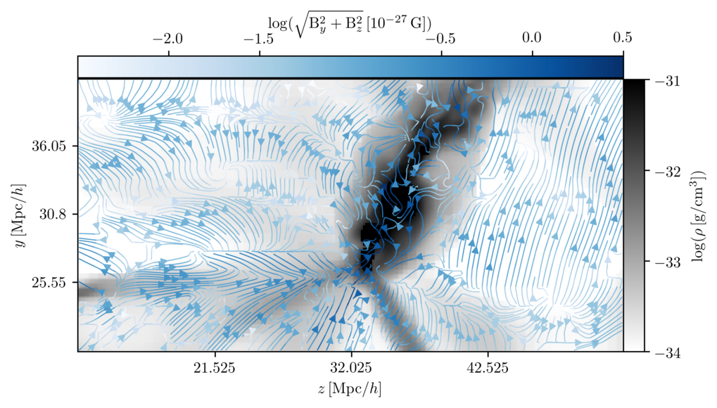 <p>Fig. 3: A slice through the Perseus Pisces galaxy cluster in the present Universe with the matter distribution depicted in grey and the blue arrows highlighting the Harrison magnetic field.</p>