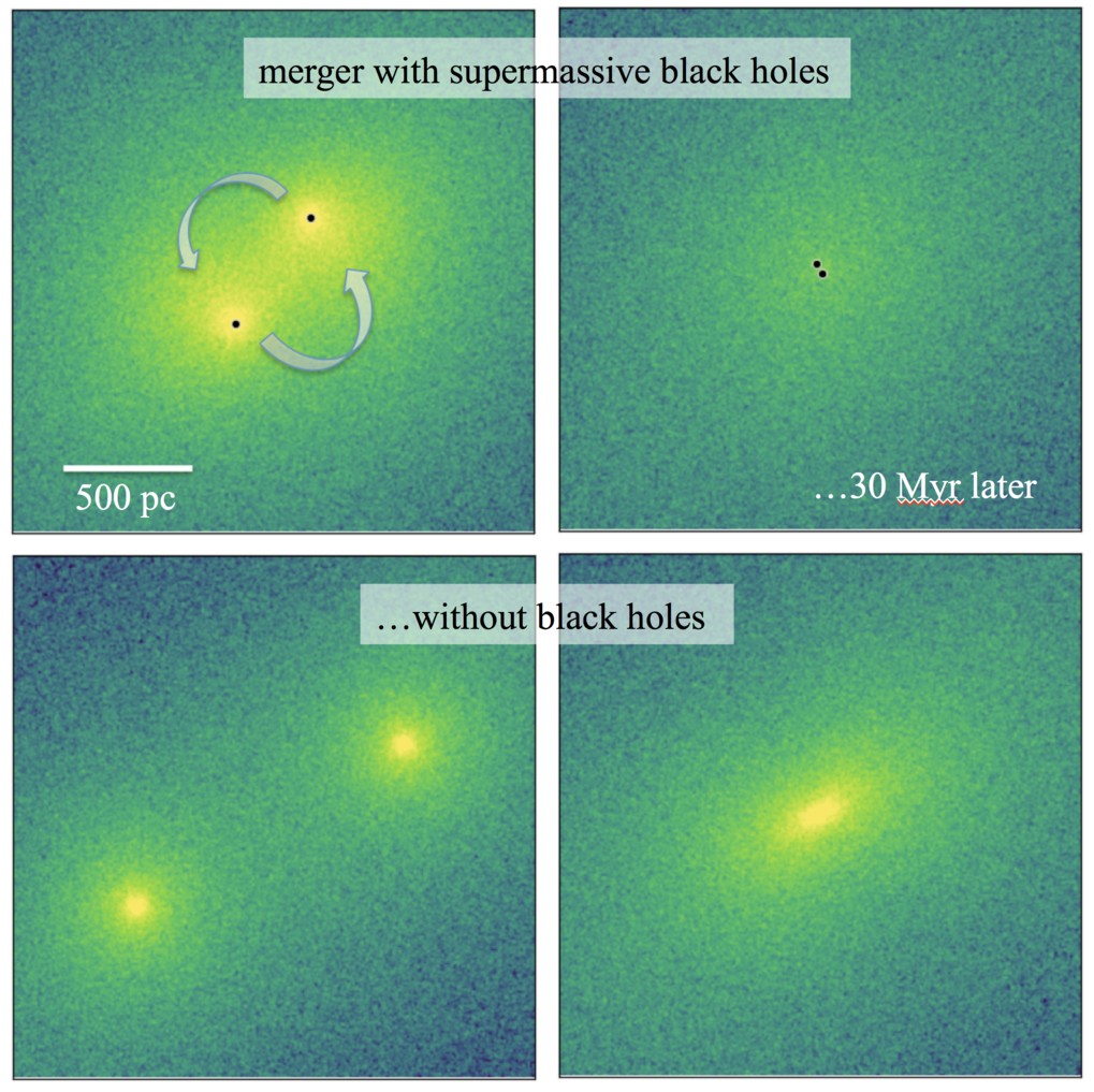 Fig. 1: These images show the stellar density distribution in the centres of merging elliptical galaxies. About 30 million years before the final coalescence of the galactic nuclei the supermassive black holes (black dots) are still surrounded by a concentration of stars (upper left panel). When the black holes form a tight binary most of these stars have been ejected, leaving behind a low-density core (upper right panel). A core does not form if the galaxies do not have supermassive black holes (bottom panels).